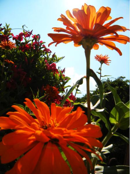 Albuquerque Botanical Gardens. Photo by Veronica Munoz / NM News Port