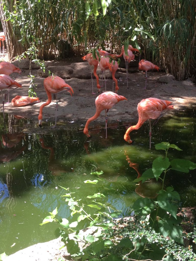 Mariah Rimmer captured this photo of the flamingo exhibit at the Albuquerque Zoo last summer. Photo by Mariah Rimmer/NMNP