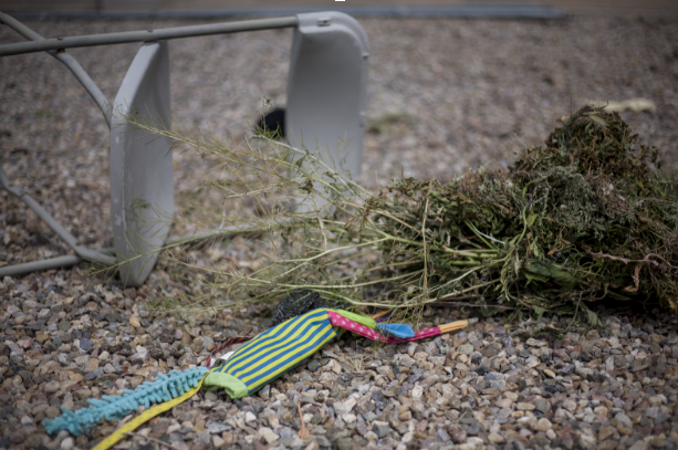 Litter accumulates on Albuquerque's Westside after a windy spring day. Albuquerque's 311 service received 11,869 calls from citizens reporting litter in the month of March. Photo by John Acosta / NM News Port