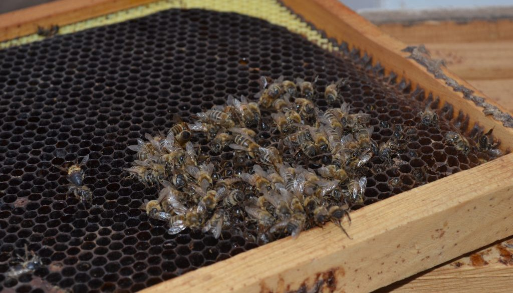 The buzz to help save honey bees - New Mexico News Port